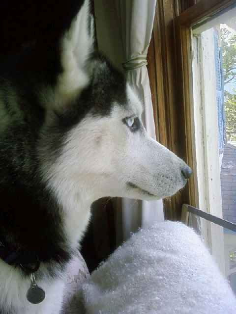 Image result for husky window