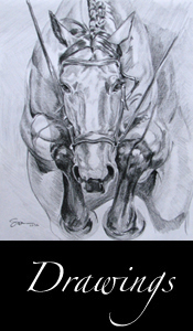 Link to Art Equine Drawings Gallery